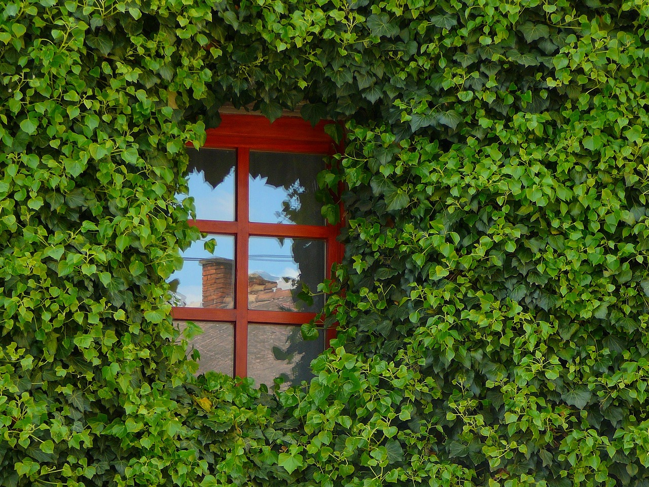 Choix de fenêtres, pourquoi se laisser guider par un professionnel ?